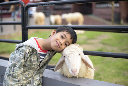 Boy Poses With Small Goat