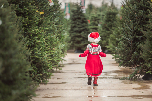 Young Girl In Red Marches Through Rows Of Christmas Trees
