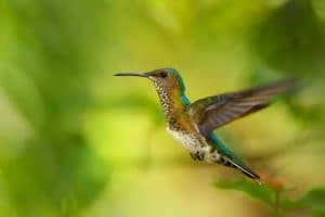 Hummingbird hovers among trees