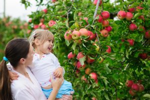 Mom and daughter pick apples