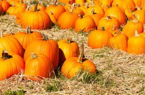 Ripe pumpkins arrange on hay