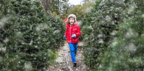 Christmas Tree Farms 2018